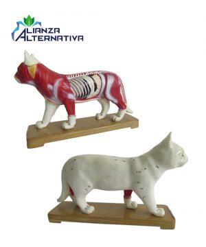 modelo-de-acupuntura-gato-de-plastico