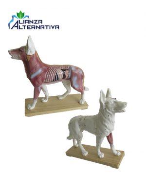 modelo-de-acupuntura-de-perro-plastico