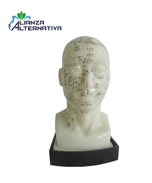 modelo-de-acupuntura-cuerpo-humano-de-cabeza-con-base-con-los-mejores-puntos-de-la-acupuntura-humana